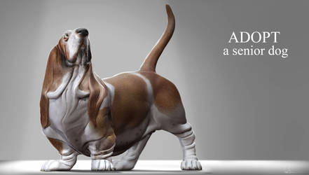 Adopt a senior dog by JBVendamme