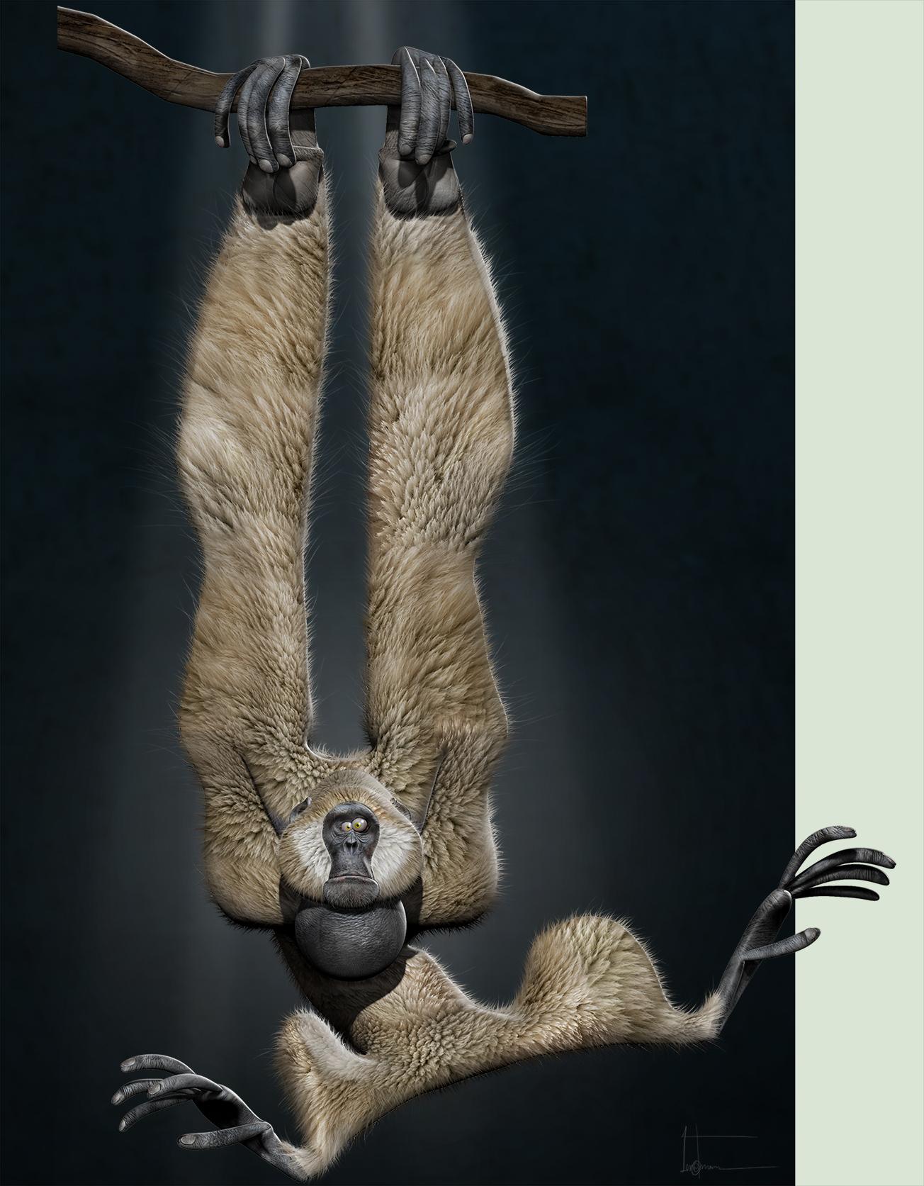 Gibbon by JBVendamme