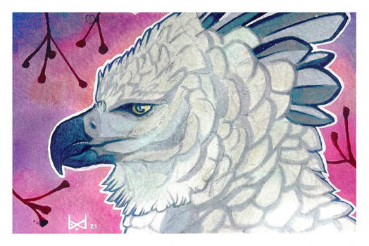 Harpy Eagle - Postcard