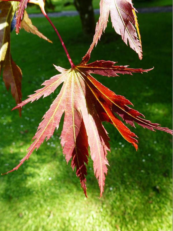 Hints of Autumn by pyrodarkangel