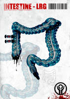 Intestine-LRG by starkravingkalm