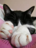 Sleepy Suz by cunningcatcrafts