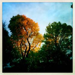 Autumn rainbow canopy