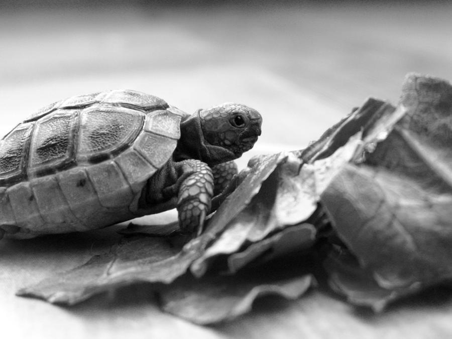 Speedy by LiberumEqua