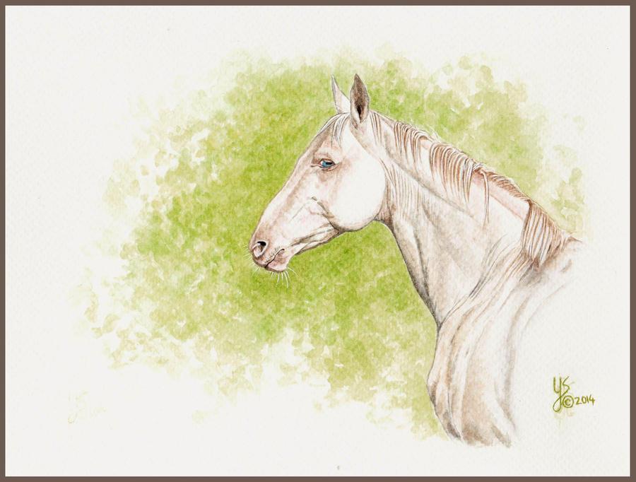Akhal-Teke stallion by LiberumEqua