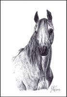 Portrait of an Arabian by LiberaEqua