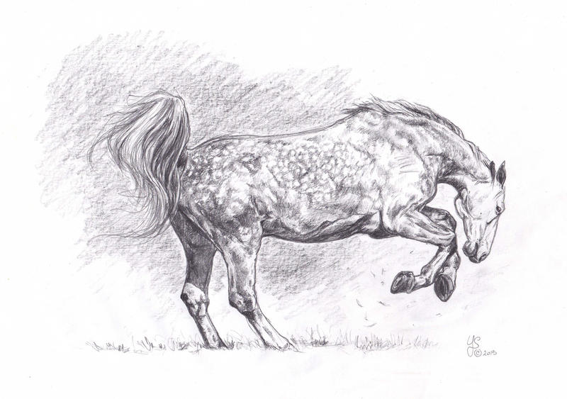 Dappled horse sketch by LiberaEqua