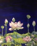 lotus i