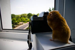 Hamster Photographer by Power-666
