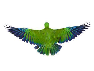Birds2 by kenglye