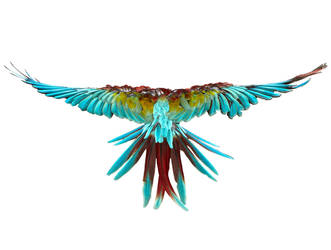 Birds5 by kenglye