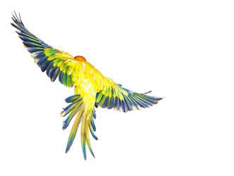 Birds6 by kenglye