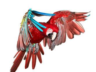 Birds7 by kenglye