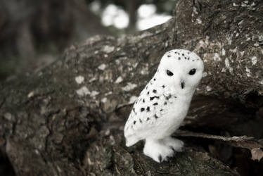 snowy owl by kenglye