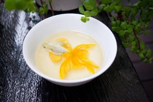 Goldfish by kenglye