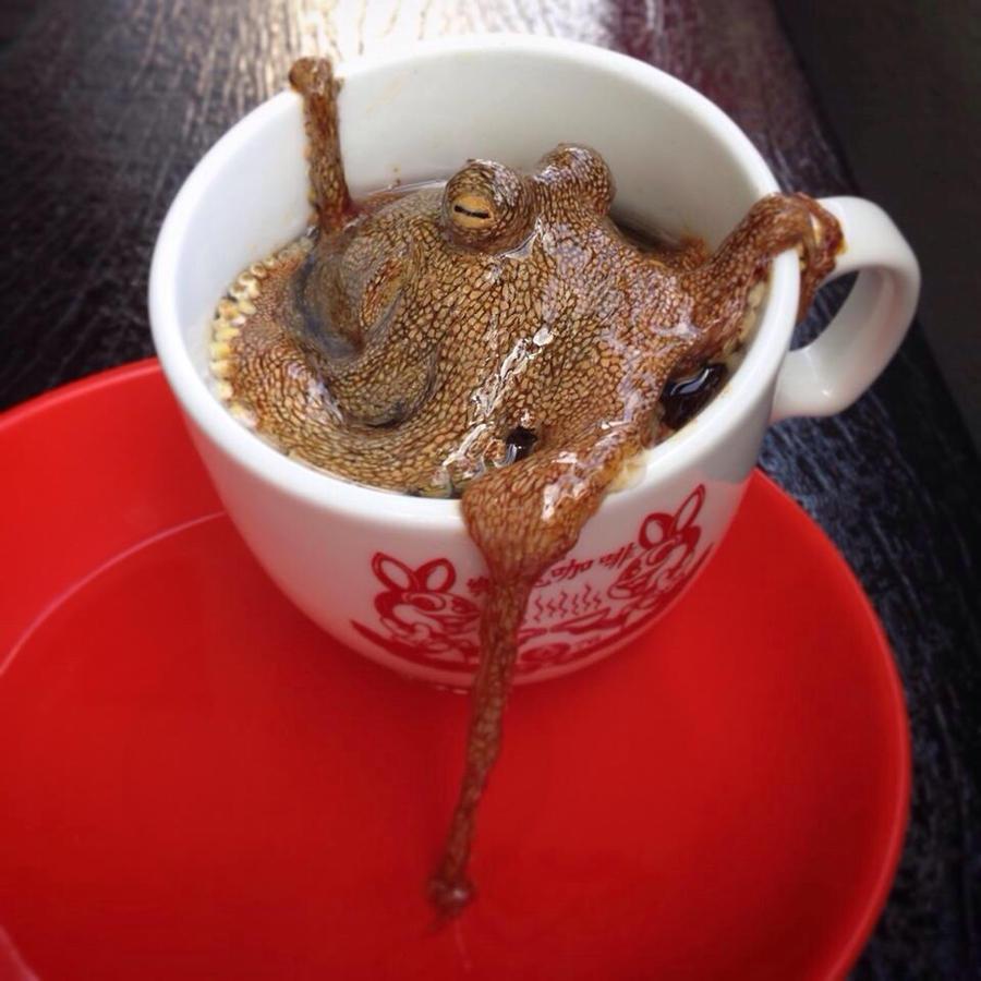 Octopi by kenglye