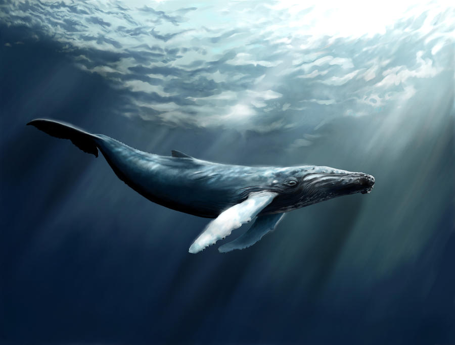 blue whale pictures - HD1600×1200