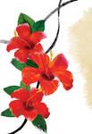 Floral fascination-Hibiscus by kenglye