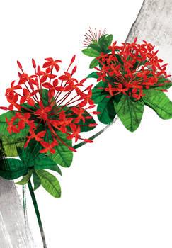 Floral fascination-Ixora