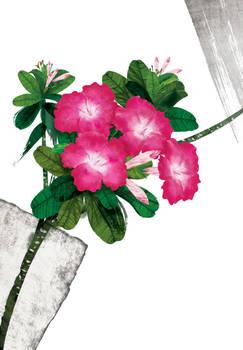 Floral fascination-Desert Rose