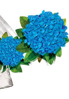 Floral fascination-Hydrangea