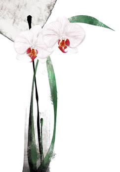 Floral fascination-Doritaenops