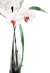 Floral fascination-Doritaenops by kenglye