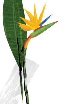 Floral fascination-Paradise