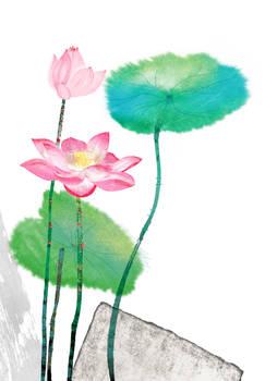 floral fascination-Lotus