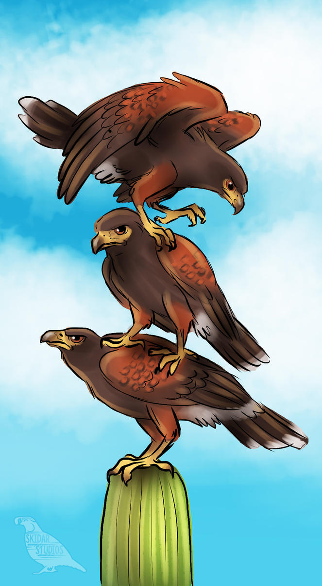 List Of Synonyms And Antonyms Of The Word Harris Hawk Stacking