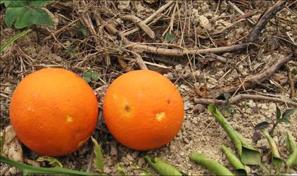 Orange Talk by isnayper