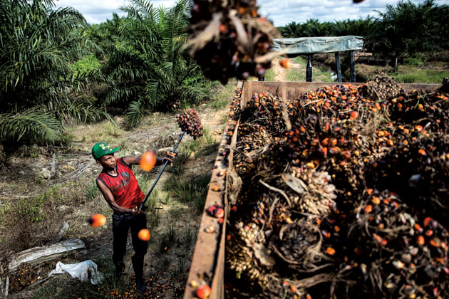 Indonesia's Palm Oil Industry Rife With Human-Righ by loonlau963