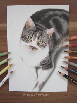 Cat (Dexter)