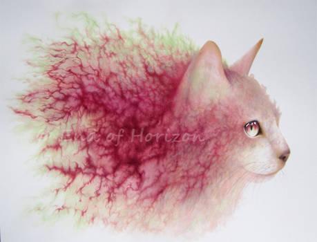 Arteries Cat