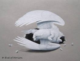 Angel cat (Neo)