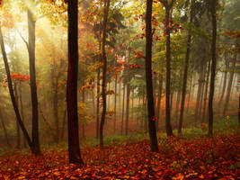 Premade Autumn BG by Tebh-stock