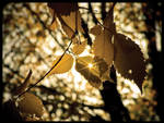 The Dying Leaves