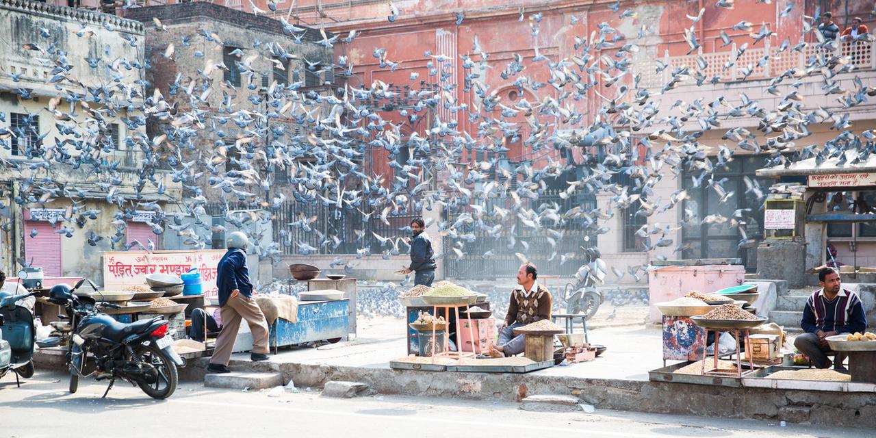 Pigeons of Jaipur by drifterManifesto