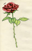 Rose Tattoo - First Stage by BloodyLuna