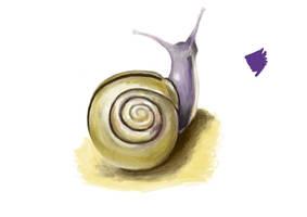Snail Study