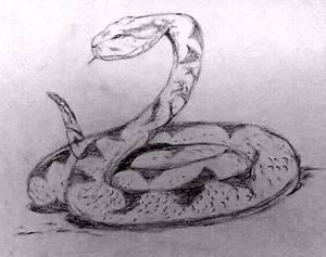 Pencil Sketch (old) Snake