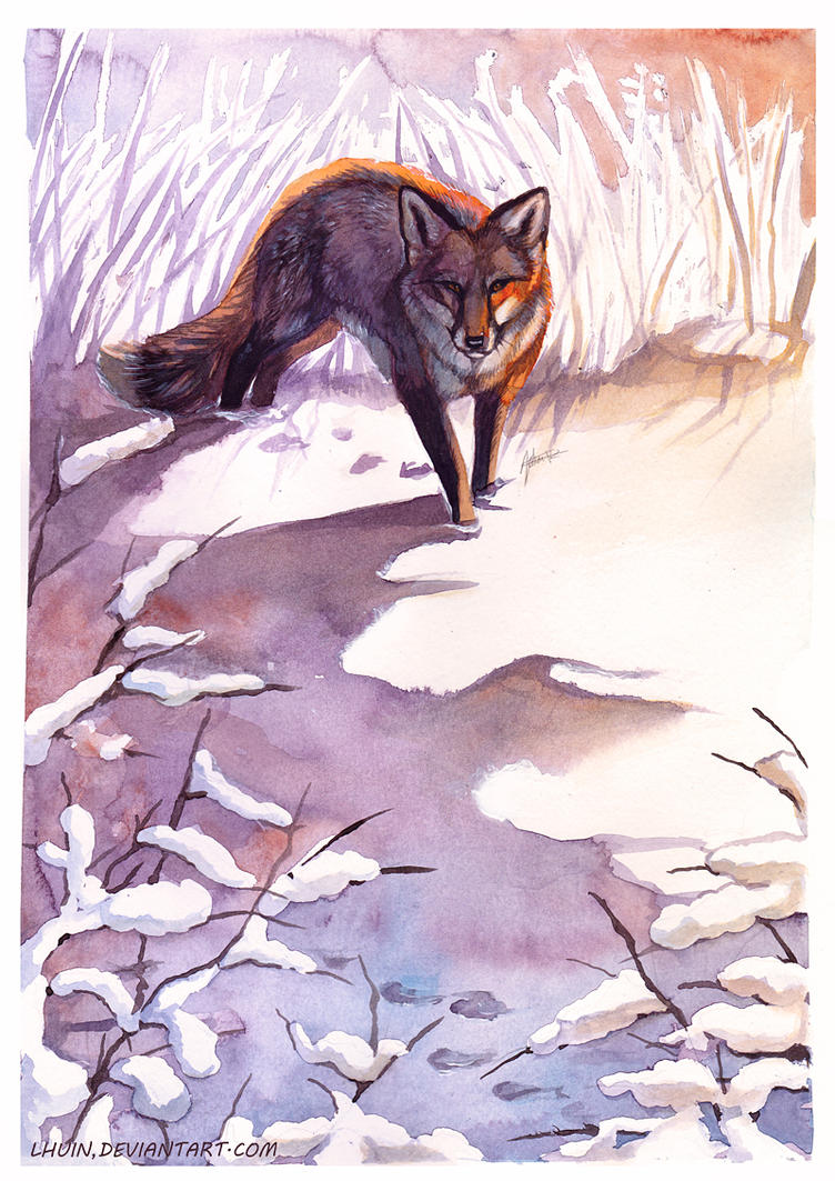 Winter Fox by Lhuin