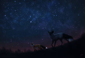 Have you ever seen the starry sky