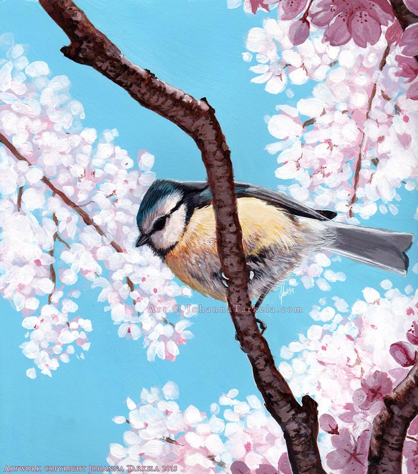 Cyanistes caeruleus by Lhuin