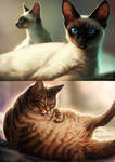 Even more cats