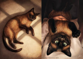 Zoey the cat by Lhuin