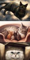 Kitties + video