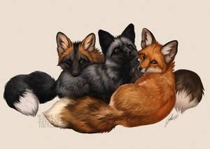 Fox Trio