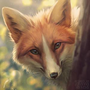 Spring Fox + VIDEO