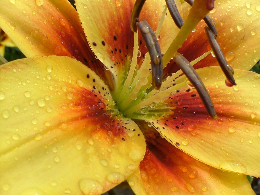 Droplets by Shyfear